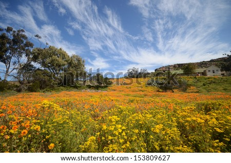 West Coast Flowers, South Africa