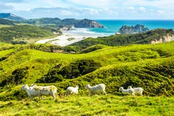 West Coast of the Southern Island, New Zealand