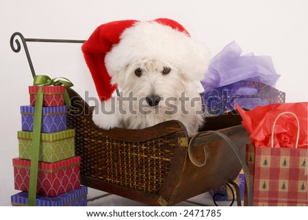 West Highland Terrier with Santa hat on sitting in a sled surrounded by Christmas gifts