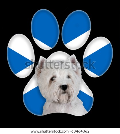 West Highland White Terrier dog portrait with a background of Scotland flag in paw print