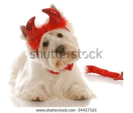 west highland white terrier dressed up as a devil