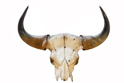 Western Country Like Head of horn or Skull of animal for adornment house