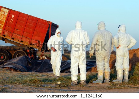 WESTERN NEGEV, ISRAEL- MARCH 18: Agriculture Ministry are burying the carcasses of dead turkeys due to Bird Flu outbreak at Kibbutz En Hashlosha in the western Negev, Israel on March 18, 2006.