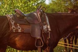 Western saddle - leather ammunition