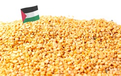 Western Sahara flag sticking in a bunch of peas. The concept of export and import of peas