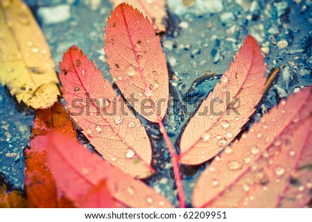 Wet and rainy autumn leaves