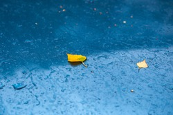 wet aquamarine blue car hood at autumn rainy day with yellow birch leaves and water drops, selective focus with boke