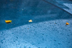 wet aquamarine blue car surface at autumn rainy day with yellow birch leaves and water drops - selective focus with blur