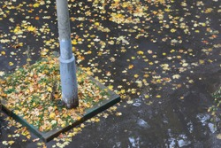 Wet asphalt with a puddle of fallen leaves and an old rusty pole. A dreary autumn day