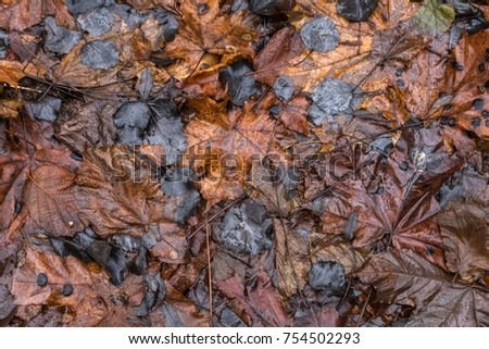Wet autumn leaves background #754502293