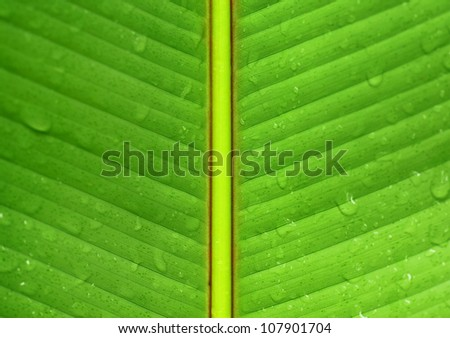 Wet banana leaf