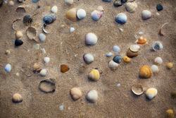 Wet beach sand with seashells background. Horizontal shot