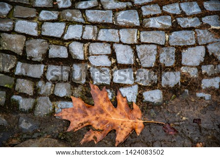 Wet brown leaf closeup in dirt near old gray pavement. Paved sidewalk in Berlin city of Germany. Cobblestone road. Wet stone texture. Fall backdrop. Autumn background. #1424083502