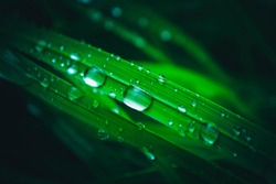 Wet colorful green grass with rain drops, abstract natural background. Fresh leaves with dew droplets. Macro view, close up.