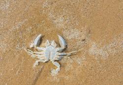 wet dead crab on asian beach.