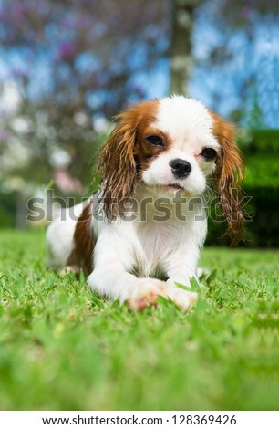 wet dog on the grass