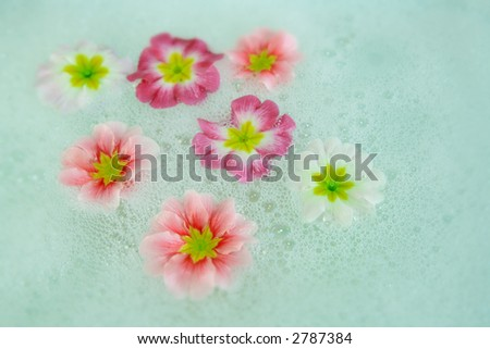 Wet flowers floating in green bubbles