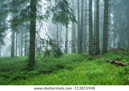 wet forest in the fog