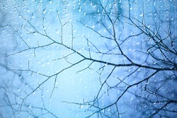 wet glass view of branches park autumn, abstract background drops on the window evening november