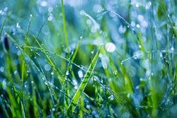 wet grass on summer morning