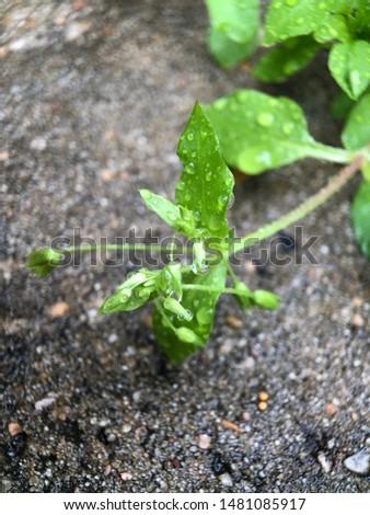 Wet greenery on wet concrete