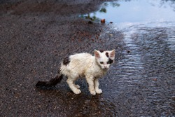 Wet homeless sad kitten on a street after a rain. Concept of protecting homeless animals