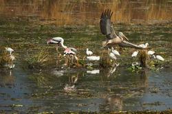 Wet land birds in action