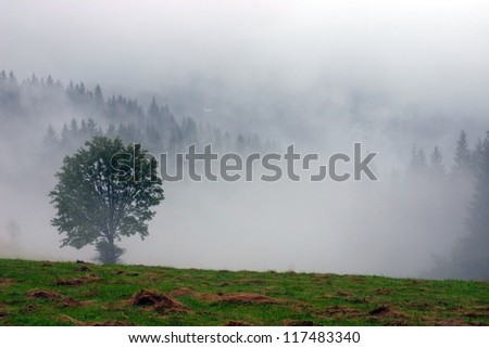 Wet Landscape With Lonely Tree in Fog, Javorniky Mountains, Slovak Republic - stock photo