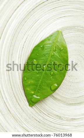 stock photo : wet leaf macro - zen concept