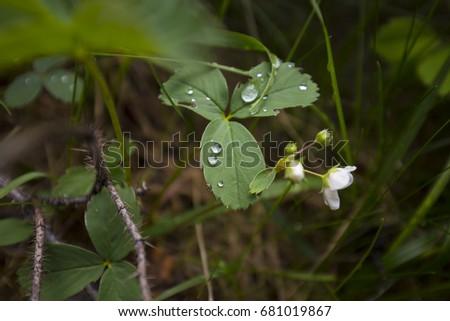 Wet leaves #681019867