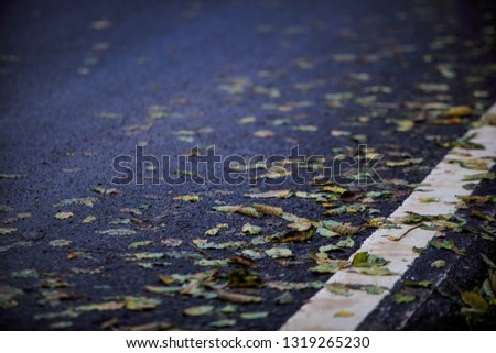 Wet leaves covering a curve on a road #1319265230