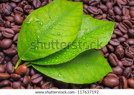 Wet lemon leaves with coffee beans on the background