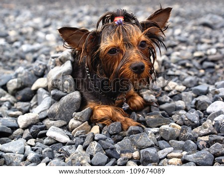 Wet little dog heated on the pebbly beach - stock photo