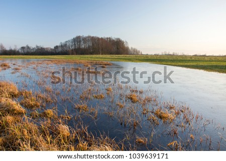 Wet meadow, copse and cloudless sky