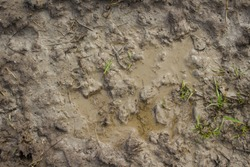 Wet mud background texture