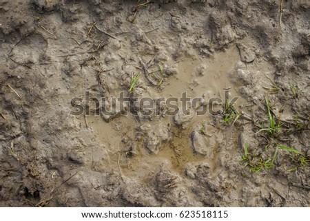 Wet mud background texture #623518115