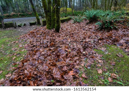 wet pile of autumn leaves piled together with tree trunks and ferns