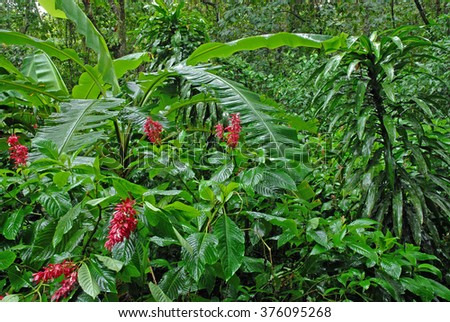 Wet plants in tropical rain forest after rainstorm in the jungle Costa Rica