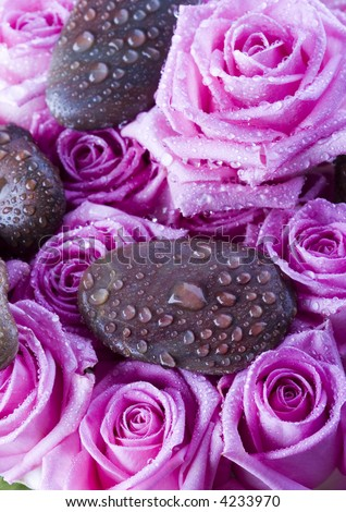 Wet roses - stock photo