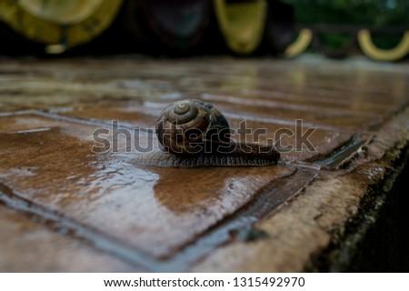 Wet snail on wet asphalt.