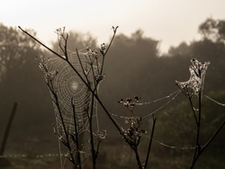 Wet spiderweb in backlight at sunrise. Moisture and condensation . Plant, flowers and nature