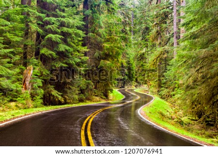 Wet winding road through a lush green forest in the Pacific Northwest