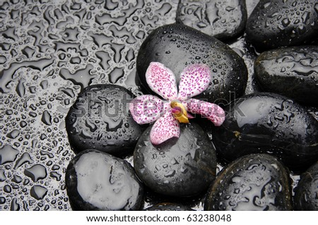 Wet zen pebble with Pink orchid .Selective focus