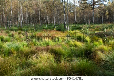 Wetland in the forest
