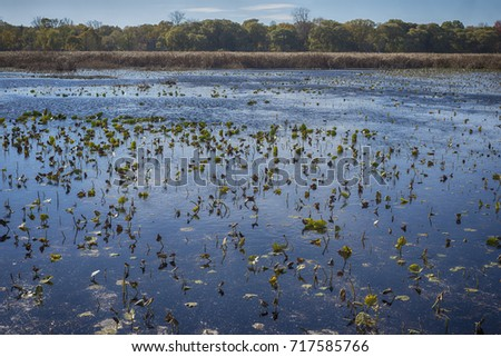Wetland landscape on Point Pelee conservation area in Ontario, Canada in the fall (November)