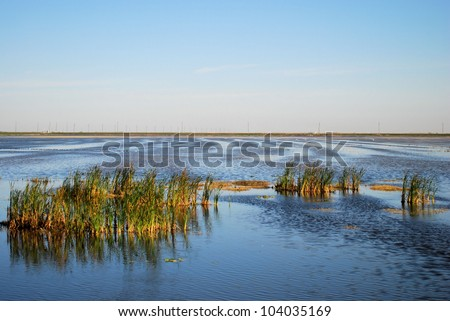 Wetlands in central Florida / Water Stripes