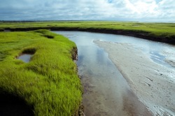 wetlands of Cape Cod in the summer