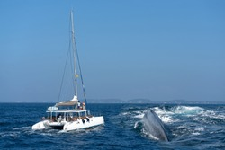 Whale back in the water and tourist yacht on whales watching safari, Mirissa, Sri Lanka.