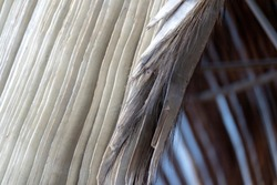 whale baleen fanon close up detail