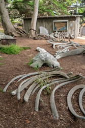 Whale Bones at Point Lobos State Natural Reserve, California